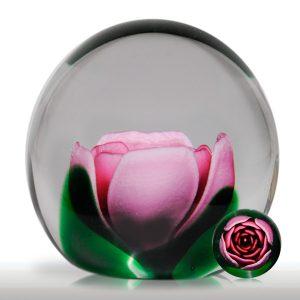 Joe Rice Pink Crimp Rose