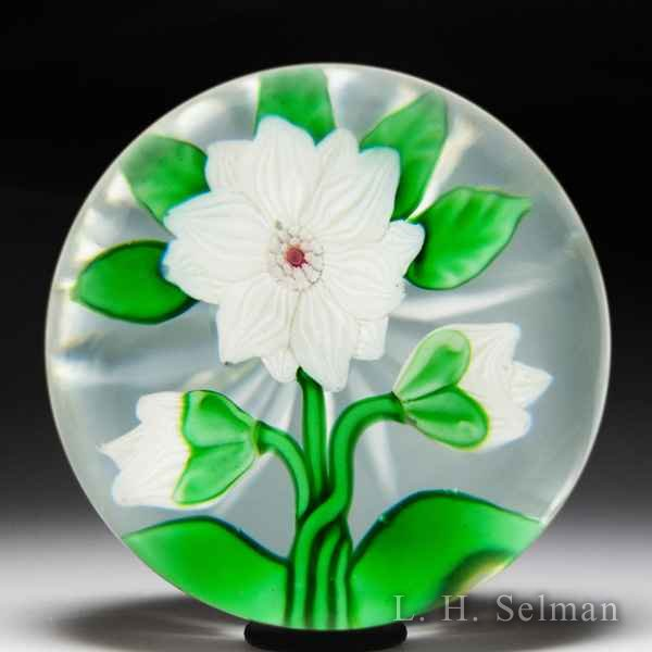 Antique Baccarat white double clematis and two buds glass paperweight. by Baccarat Antique