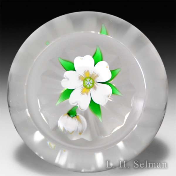 Perthshire Paperweights white primrose and bud on clear, star-cut ground faceted glass paperweight.  by  Perthshire Paperweights