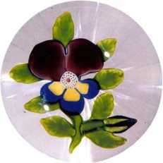 4.129 Pansy—Baccarat, type II
