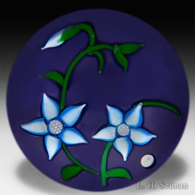 'J' Glass 1980 two blue clema- tis flowers on violet flash by J Glass