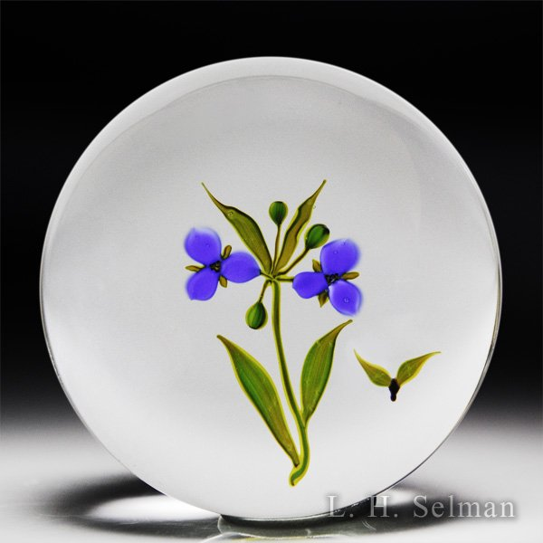 Paul Stankard 1975 'Spiderwort' American Floral Series glass paperweight. by Paul Stankard