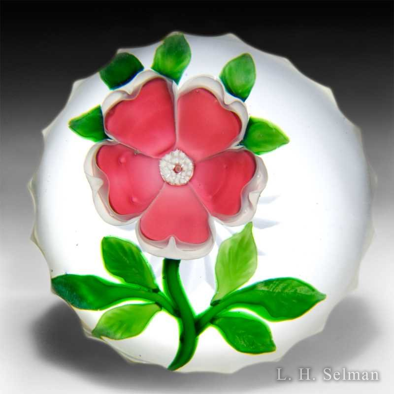 Antique Baccarat red primrose glass paperweight. by  Baccarat Antique
