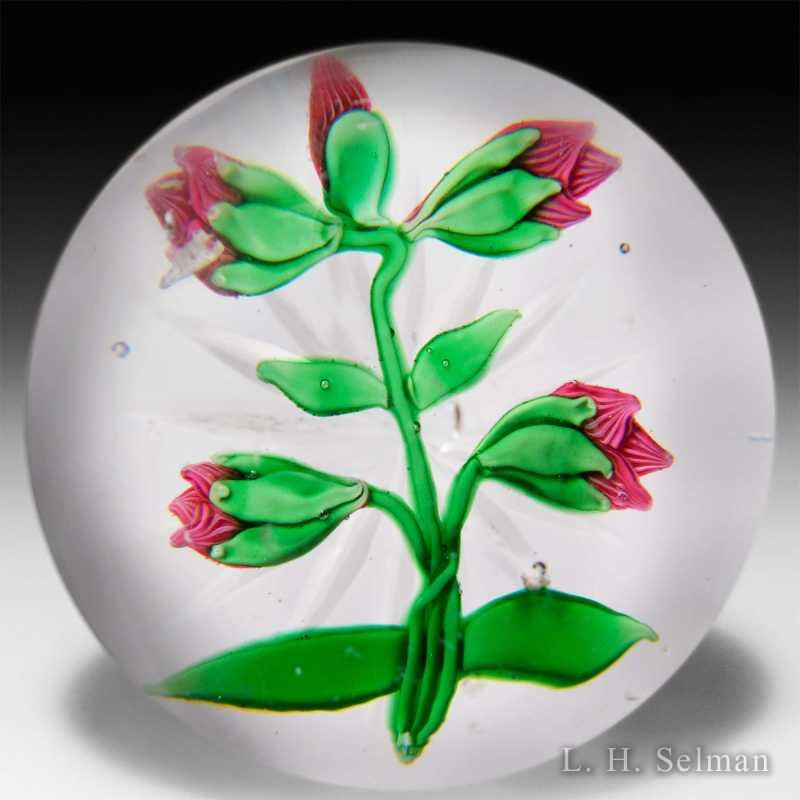 Antique Baccarat pink clematis buds paperweight. by  Baccarat Antique