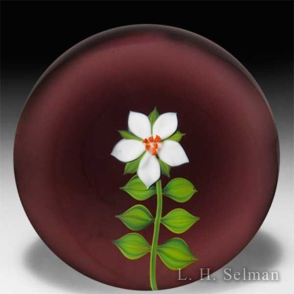 Paul Stankard 1972 early edition 'White Marsh Gentian' American Floral Series paperweight. by Paul Stankard