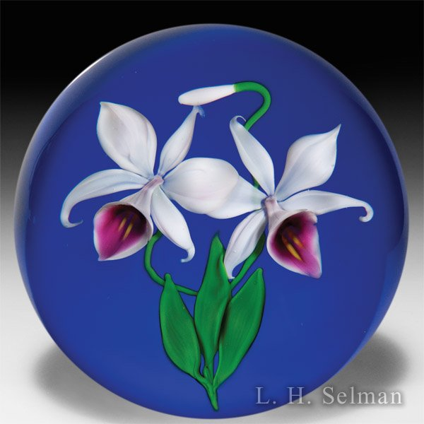 Victor Trabucco 1986 two orchids on cobalt blue magnum glass paperweight. by Victor Trabucco
