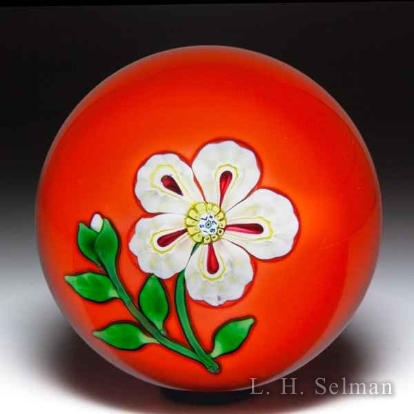 Saint Louis 1973 white flower on orange ground glass paperweight. by Modern Saint Louis