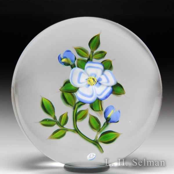 Debbie Tarsitano blue and white anemone flower glass paperweight. by Debbie Tarsitano