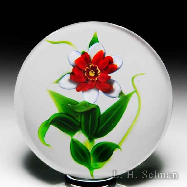 Debbie Tarsitano red and white fantasy flower glass paperweight. by Debbie Tarsitano
