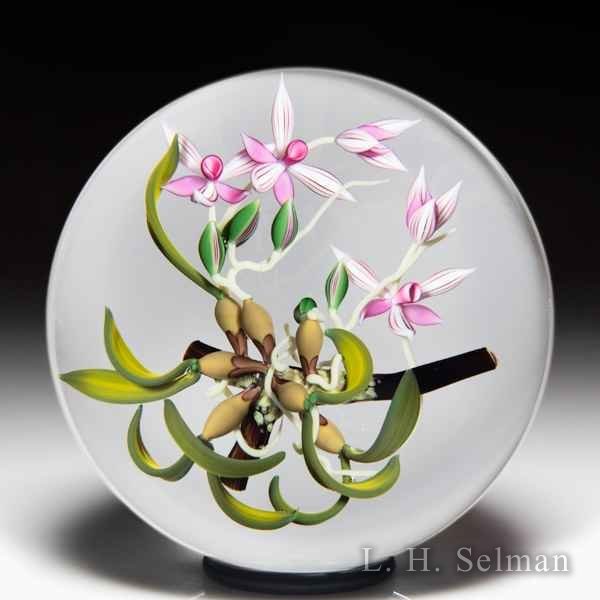 Chris Buzzini 1992 pink epiphytic orchids glass paperweight. by Chris Buzzini