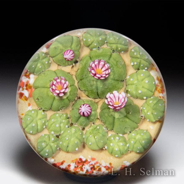 Clinton Smith 2020 mammillaria pink blossom cactus paperweight. by Clinton Smith